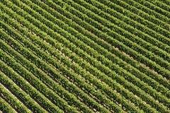 Vin från över Arkivbild