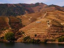 Vin gauche Portugal de vignobles de rivière de Douro photos libres de droits