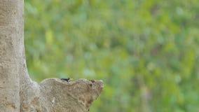 Vin in het nest op hoge boom stock video