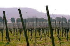 Vin italien de champs de vignoble Photos libres de droits