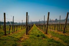 Vin italien de champs de vignoble Photo stock