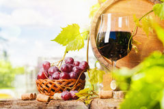 Vin rouge et raisins Photo libre de droits