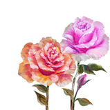 Vinage pink and yellow roses. Royalty Free Stock Images