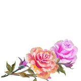 Vinage pink and yellow roses. Stock Photo