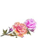 Vinage różowe i żółte róże ilustracja wektor