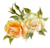 Vinage white yellow roses. Royalty Free Stock Photos