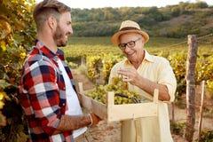 Vinaio sorridente del padre che mostra l'uva al figlio Fotografia Stock Libera da Diritti