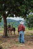 Vinales谷,古巴- 2015年9月24日:地方古巴coutrysi 免版税图库摄影