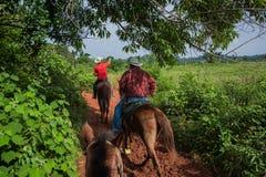 Vinales谷,古巴- 2015年9月24日:地方古巴coutrysi 库存照片