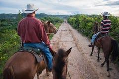 Vinales谷,古巴- 2015年9月24日:地方牛仔riddin 库存图片