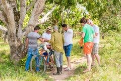 VINALES,古巴- 2017年5月13日:一位芒果卖主在树树丛里  复制文本的空间 图库摄影