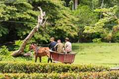 VINALES,古巴- 2017年5月13日:有一匹马的一个推车在森林 复制文本的空间 免版税库存图片