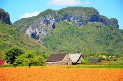 vinales долины Кубы Стоковое фото RF