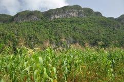 Vinales庄稼和山,古巴 免版税图库摄影