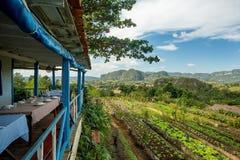 Vinales, Cuba Agriculture biologique images libres de droits