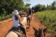 Cohabitation between tourists on horseback and Cubans with the w. Vinales, Cuba - december 5, 2017: Cohabitation between tourists on horseback and Cubans with Stock Photos