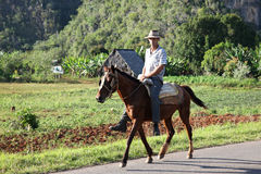 Vinales, Cuba. Man on a horse royalty free stock photos