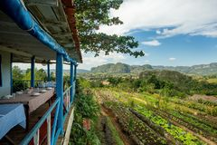 Free Vinales, Cuba. Organic Farming Royalty Free Stock Images - 116712289