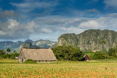 Free Vinales, Cuba. Tobacco Farming Royalty Free Stock Photos - 143974528
