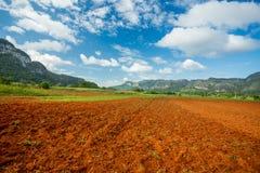 Vinales, Cuba. Tobacco farming royalty free stock photography