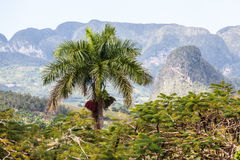 Vinales dal, Kuba, Royaltyfri Bild