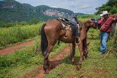 Vinales dal, Kuba - September 24, 2015: Den lokala cowboyen förbereder sig Royaltyfri Fotografi