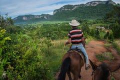 Vinales dal, Kuba - September 24, 2015: Lokal cowboyriddin Arkivfoton