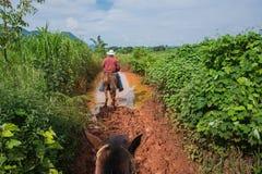 Vinales dal, Kuba - September 24, 2015: Lokal kubansk coutrysi Arkivfoto