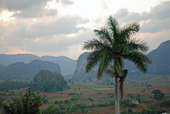 Vinales dolina, Kuba Zdjęcie Stock