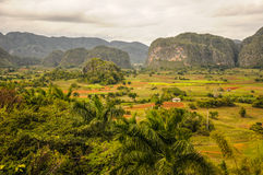 VINALES dolina KUBA, STYCZEŃ, - 19, 2013 Panoramiczny krajobraz rywalizuje Obrazy Stock