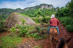 Vinales dolina Kuba, Wrzesień, - 24, 2015: Lokalny kubański coutrysi Zdjęcie Royalty Free