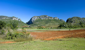 Vinales farmland, Cuba Royalty Free Stock Photography