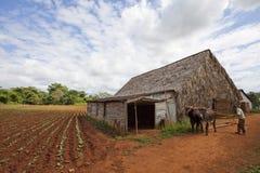 Vinales, Kuba Stockfoto