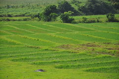 Vinales luksusowa sceneria, Kuba Fotografia Royalty Free