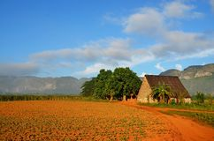 Vinales national park and its typical tobacco house, Cuba. Vinales valley, national park, tobacco house where tobacco is being dried and manufactured, Cuba Stock Photography