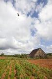 Vinales Nationalpark Lizenzfreies Stockfoto