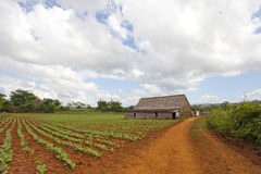 Vinales Nationalpark Lizenzfreie Stockfotografie
