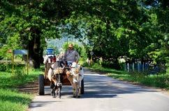 Vinales och dess folk; Kuba Royaltyfri Bild