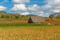 Vinales Royalty Free Stock Images