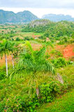 Vinales valley Royalty Free Stock Photography