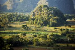 Vinales valley in Cuba. The valley of Vinales in Cuba: plantation of tobacco and karst mogotes Royalty Free Stock Image