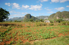 The Vinales valley in Cuba Stock Photography