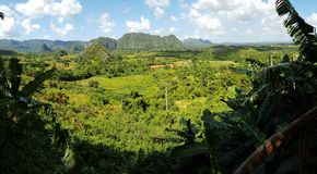 Vinales Valley. In Cuba, forest Panorama Stock Photography