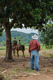Vinales Valley, Cuba - September 24, 2015:  Local cuban coutrysi Royalty Free Stock Photography