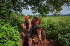 Vinales Valley, Cuba - September 24, 2015:  Local cuban coutrysi Stock Photo