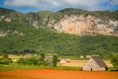 Vinales, Cuba. Tobacco farming stock photo