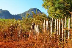 Vinales valley in the morning, Cuba Royalty Free Stock Photo