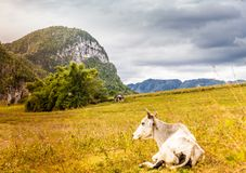 A typical view in Vinales Valley in Cuba. royalty free stock photos