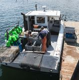 Fisherman sorting and selling live Maine lobsters. Vinalhaven, Maine, USA - 4 August 2017: Lobster men keeping Maine`s lobster industry alive sorting live stock image