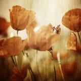 Vinatge kwiatów makowy pole Zdjęcia Stock